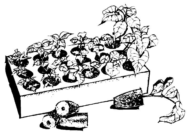 seedlingtray.jpg